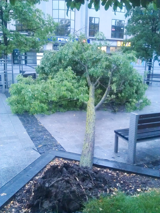 spadnuty-strom-namestie-zvolen