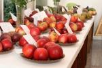 vystava-ovocia-zeleniny-zvolen-13