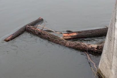 drevo-v-hrone-5