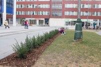 vysadba-sturov-park-1