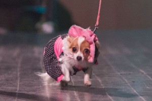 dog-fashion-show-sk-2012-zvolen-16