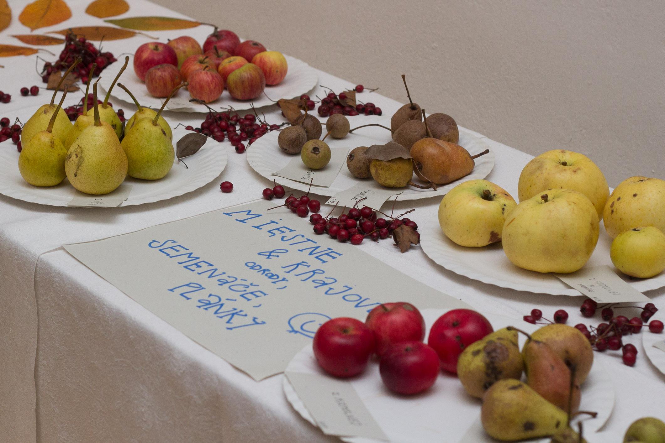 plodobranie-radnica-zvolen-3
