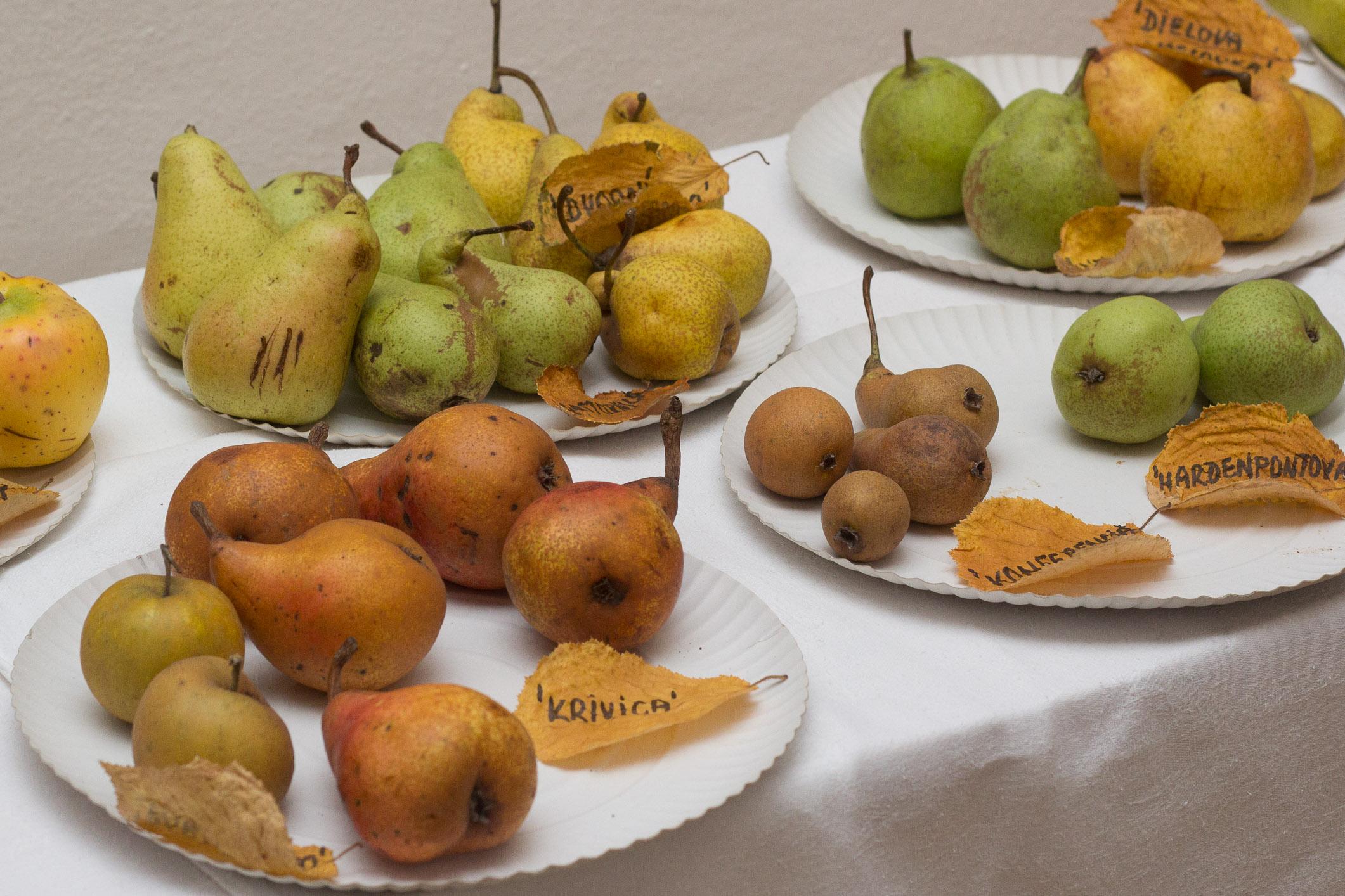 plodobranie-radnica-zvolen-5