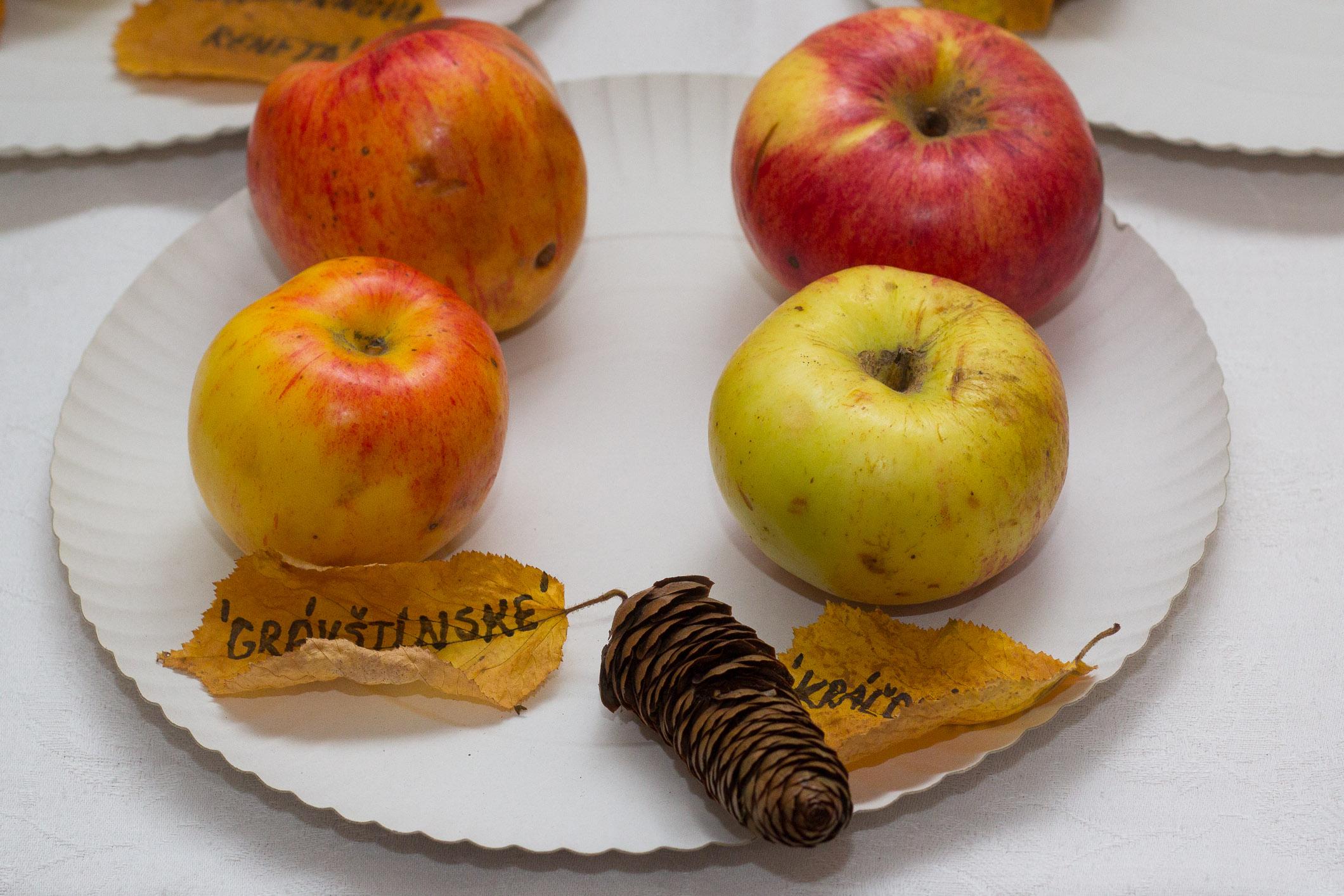 plodobranie-radnica-zvolen-8