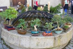 bonsaje-na-zvolenskom-zamku-3