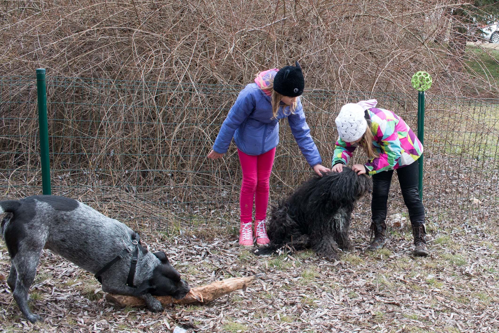 Zoznamka Staffordshire psy