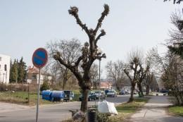 strihanie-stromov-zvolen-1