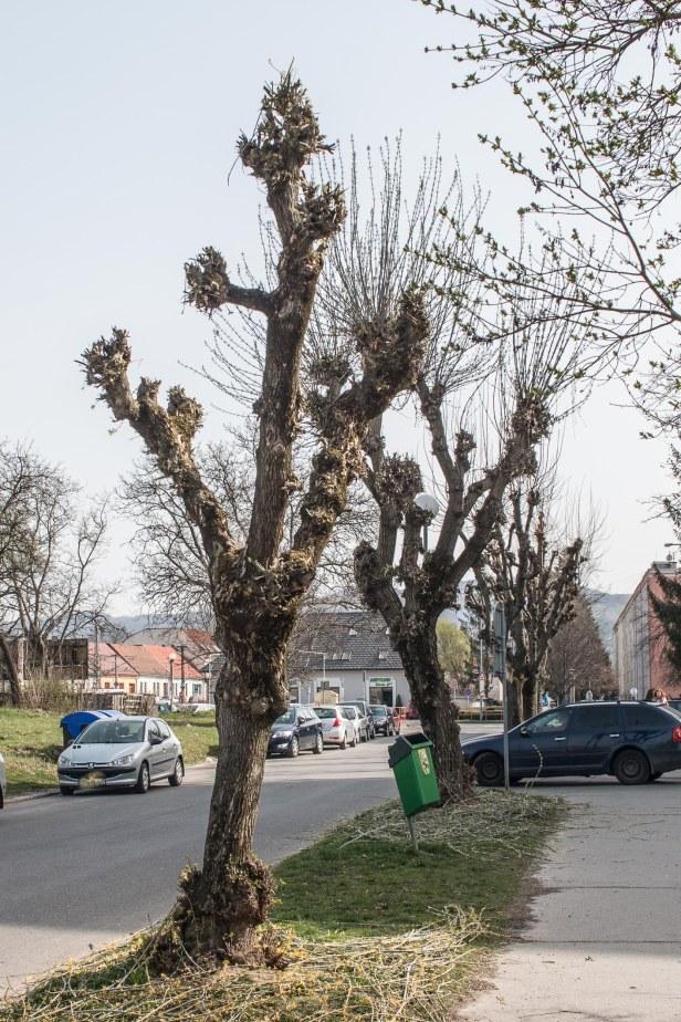 strihanie-stromov-zvolen-2