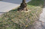 strihanie-stromov-zvolen-3