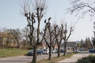 strihanie-stromov-zvolen-4