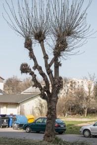 strihanie-stromov-zvolen-5