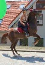 mladá slečna na koni