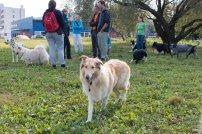 psia-zoznamka-na-zapade-11