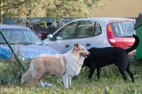 psia-zoznamka-na-zapade-18