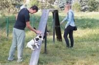 psia-zoznamka-na-zapade-25