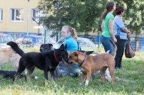 psia-zoznamka-na-zapade-26