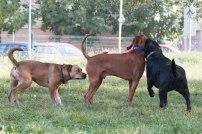 psia-zoznamka-na-zapade-28