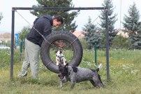psia-zoznamka-na-zapade-7