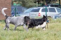 psia-zoznamka-na-zapade-9