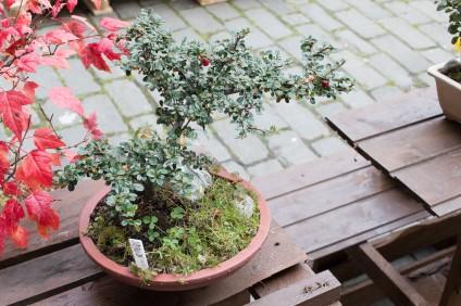 bonsaje-zvolen-zamok-11
