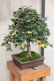 bonsaje-zvolen-zamok-14