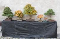 bonsaje-zvolen-zamok-17