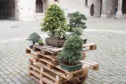 bonsaje-zvolen-zamok-18