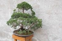 bonsaje-zvolen-zamok-2
