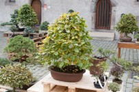 bonsaje-zvolen-zamok-4