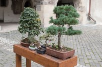 bonsaje-zvolen-zamok-5