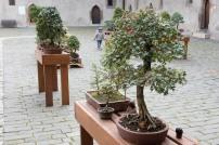 bonsaje-zvolen-zamok-6