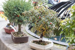 bonsaje-zvolen-zamok-9