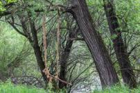 hojdačka zakvačená na strome - (Canon 70-300mm USM nano)