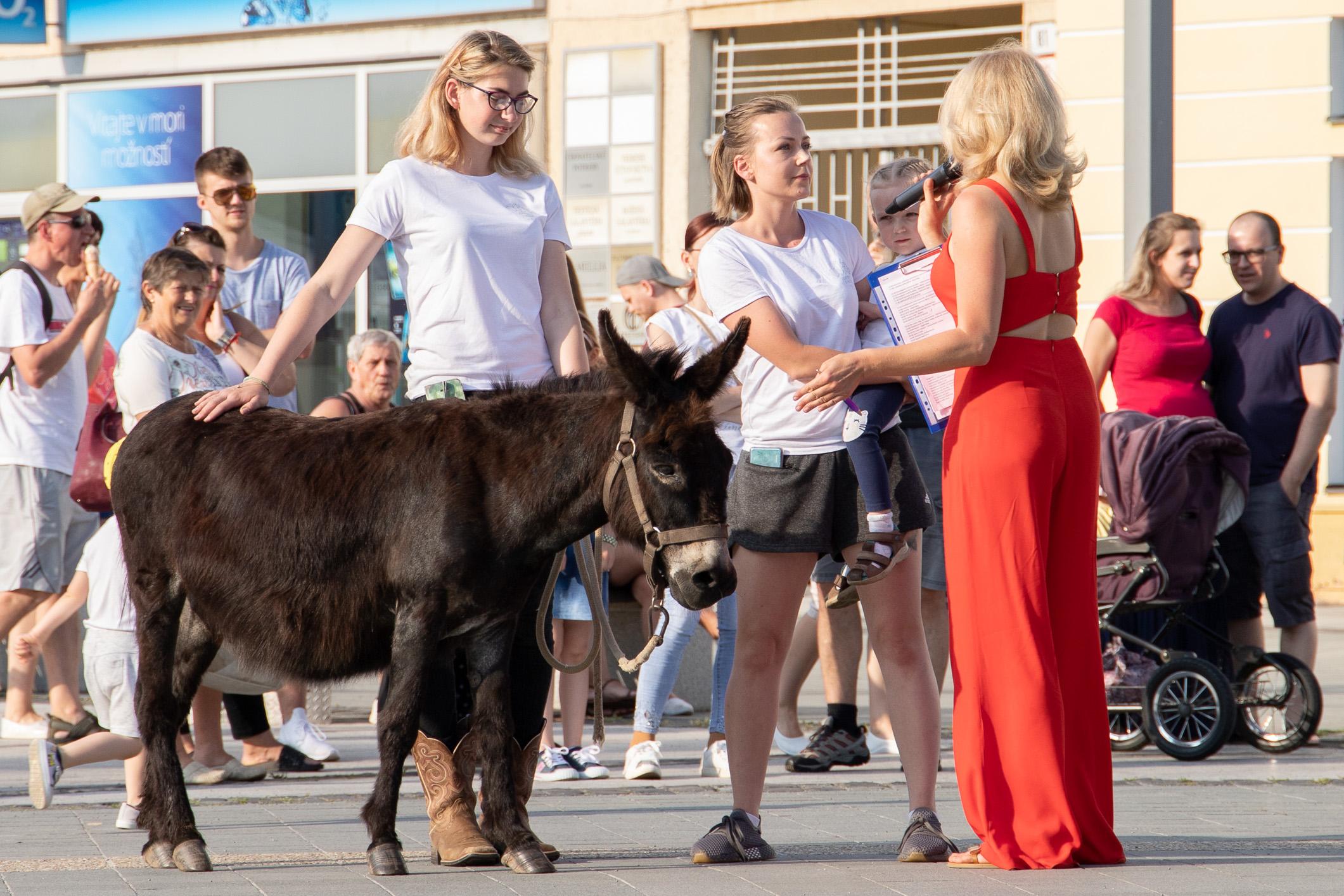 korzo-v-znameni-zvierat-62
