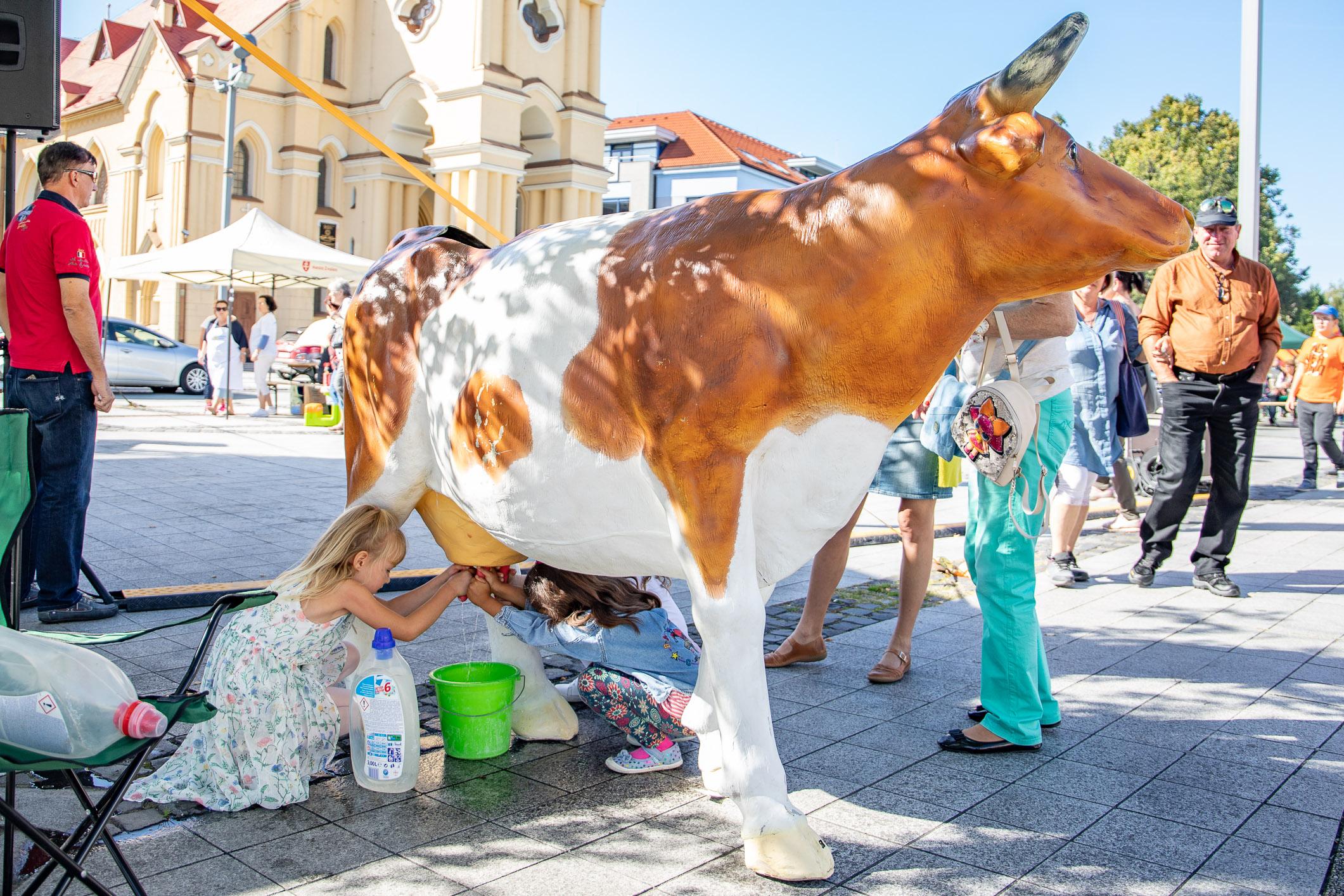 trenazer-dojenia-krava