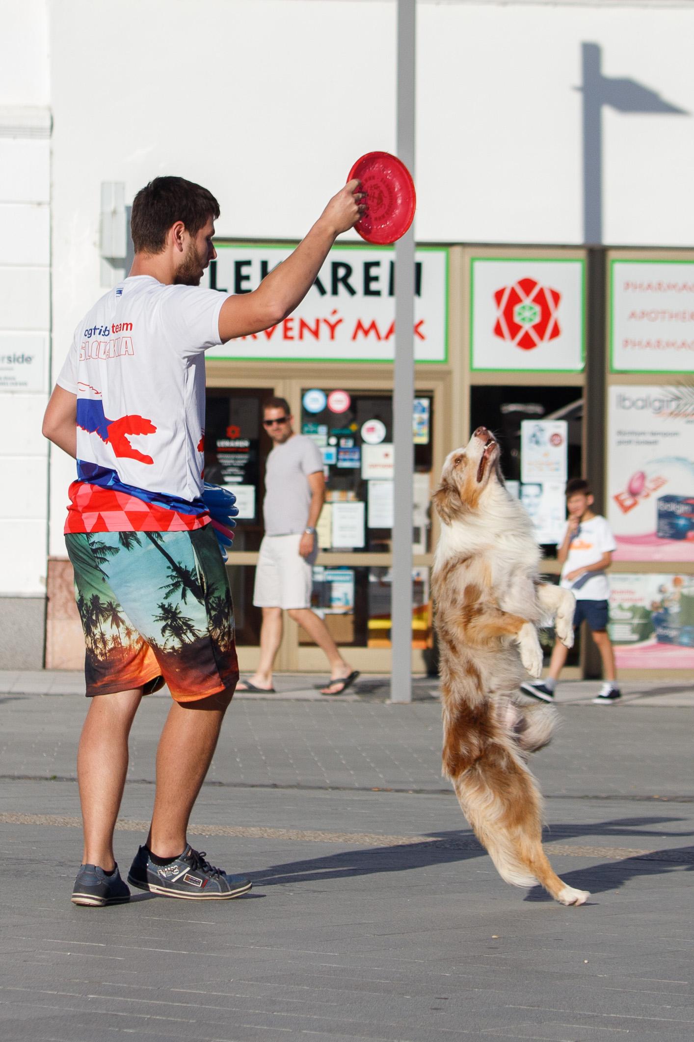 szocs-dogfrisbee-korzo-zv-21