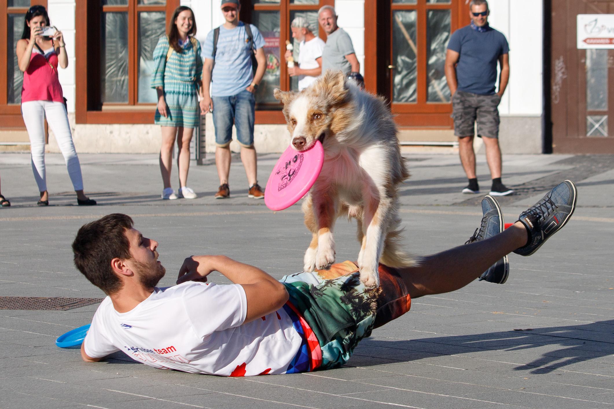 szocs-dogfrisbee-korzo-zv-23
